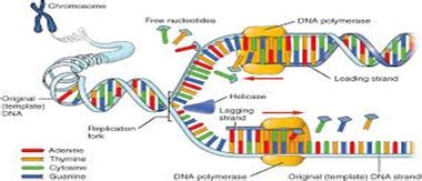 Protein Synthesis - Essay by Twelveroses